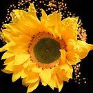 Sunflower Art by hurmerinta