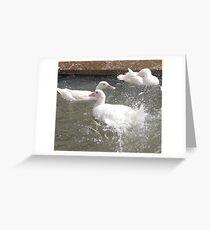 Splashing ducks Greeting Card