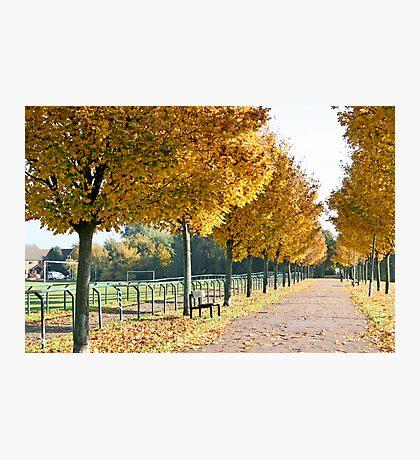 Autumn stroll Photographic Print