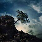 dangered tree by Joana Kruse