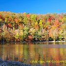 Clarks Peak foliage by PJS15204
