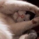 Soft kitty by aka-photography