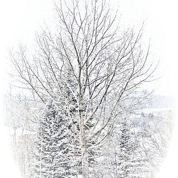 Winter Wizardry VIII by alabca