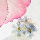 Hydrangea in Ice - 6 by Ann Garrett