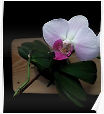 Orchid realistic flower illustration Poster
