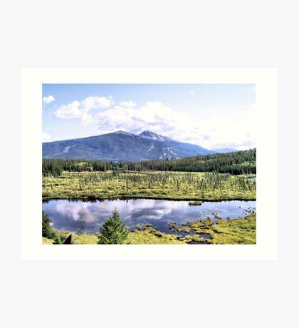 Alpine Marsh Art Print