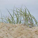 Dune Grass by Lou Van Loon