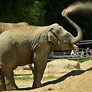 Elephant  by Mark Grech