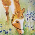 Horse in Lavender Field by nroche