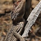 Bearded Dragon by Barbara Helps