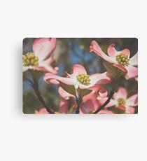 Pink Dogwood Blossoms Canvas Print