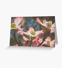 Pink Dogwood Blossoms Greeting Card