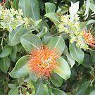 Queensland Native Flower by Lou Van Loon