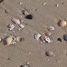 Shelly Beach by Lou Van Loon