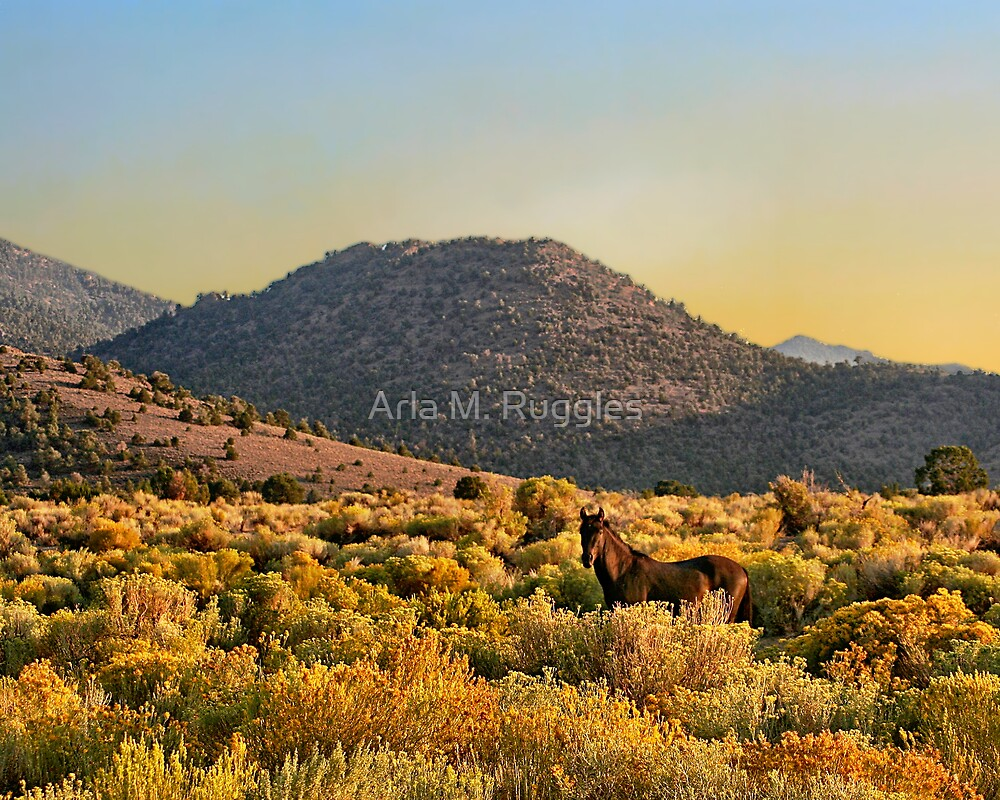 Mustang In Gold by Arla M. Ruggles