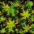 Candys Crazy Cannabis Camo  by Gypsykiss