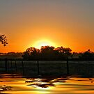 Sunny Delight by Pat Moore