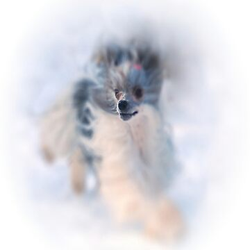 Chinese Crested Dog in the snow by Batiste