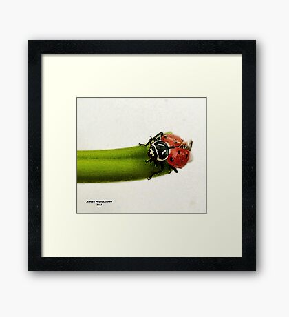 Little Miss             ( LadyBug Series ) Framed Print