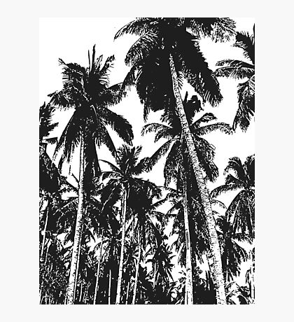 Palm Trees in a Posterised Design Photographic Print