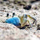 Blue Crab Tobago by ten2eight
