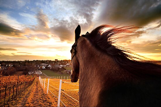 golden way home by Dan Shalloe