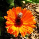 Stripes on Orange by Rosalie M