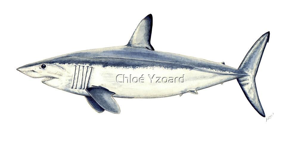 Mako shark by Chloé Yzoard