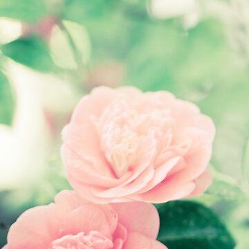 Springtime bloom by lightwanderer