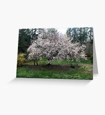We Shall Have Plums! Greeting Card