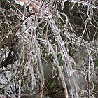 Ice Encapsulated Branches by lezvee