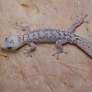 Lesueur's Velvet Gecko by Andrew Trevor-Jones
