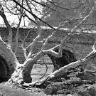 Winter Bridge by Francis Drake