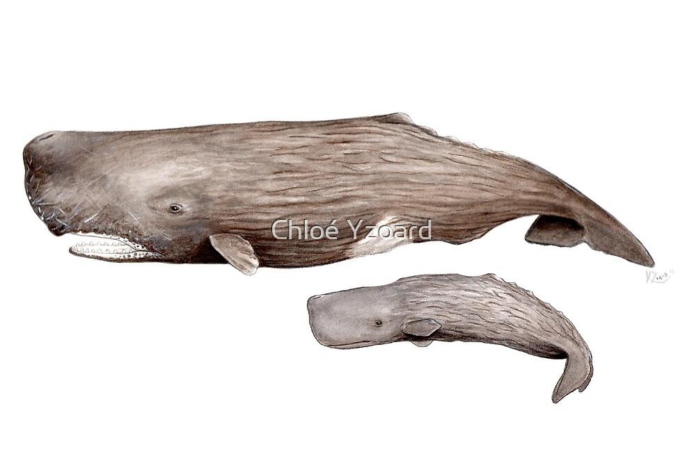 Sperm whale  by Chloé Yzoard