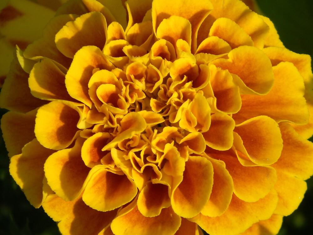 yellow flower poster print closeup macro by Sheila McCrea