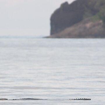 crocodile, cow bay by colhellmuth