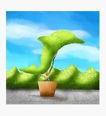 Topiary Dolphin  Photographic Print