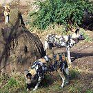 African Wild Dogs by Tamara Valjean