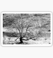 Winter Willow Sticker