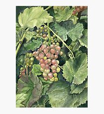 Winery Tour Photographic Print