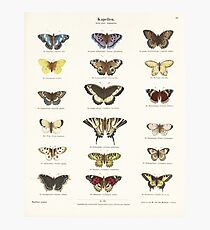 Vintage Butterfly Chart Photographic Print