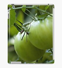 Green Tomatoes on the Vine iPad Case/Skin