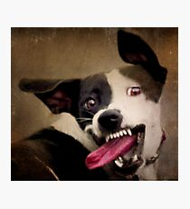 WARNING: OBAMA'S COMING FOR YOUR CHEW TOYS Photographic Print
