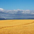 Yarra Valley Farmland by Joel McDonald