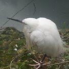 White Bird by karenuk1969