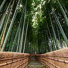 « Arashiyama » par Jonathan B. Roy