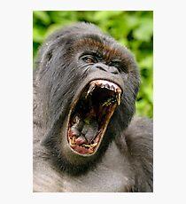 Silverback Gorilla - Virunga National  Park Rwanda Photographic Print