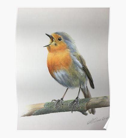 Robin singing Poster