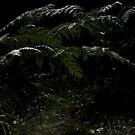 Darken Fern by MIchelle Thompson