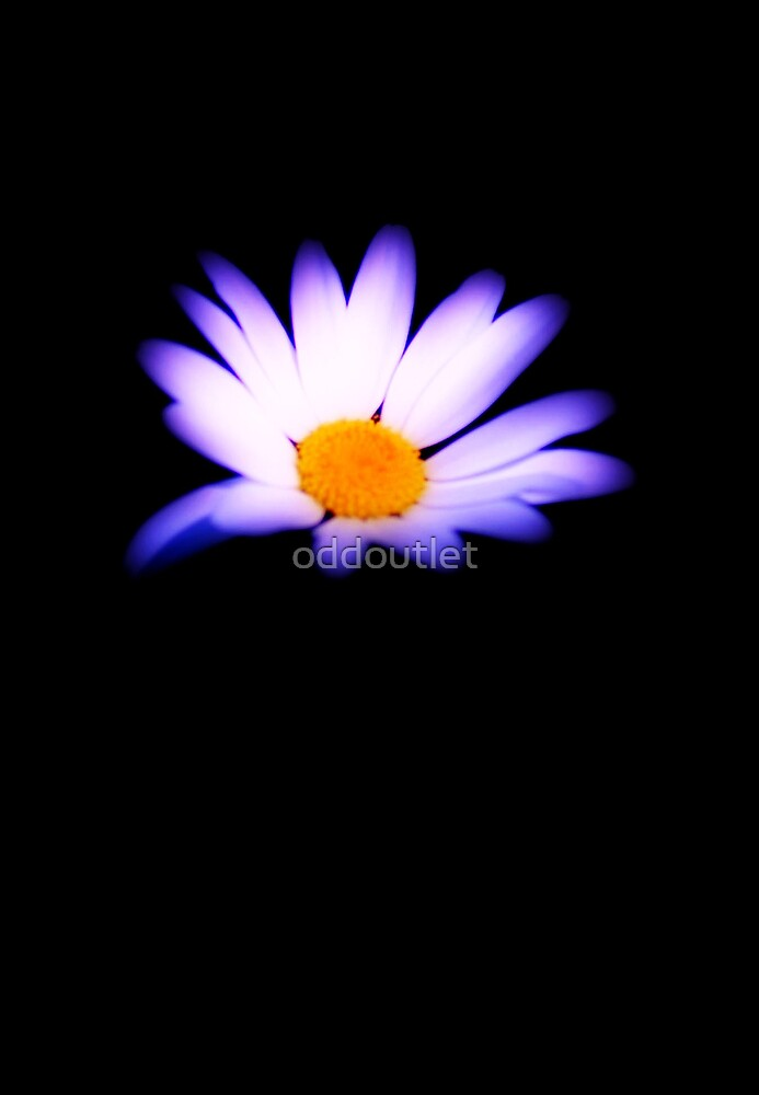 lone daisy  by oddoutlet